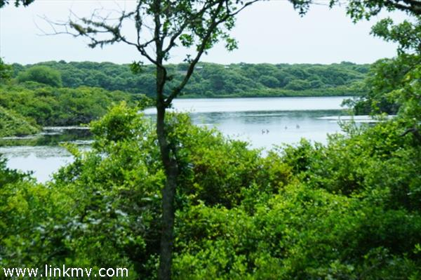 The Jennies Cove Lot at South Shore Estates, West Tisbury, MA