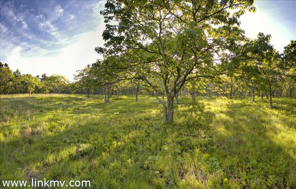 The Savannah Lot at South Shore Estates, West Tisbury, MA